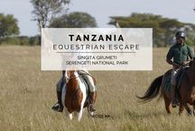 Experience - Equestrian Escape / Harness those equestrian skills and take to the Serengeti on horse-back. Experience the ultimate bespoke safari that allows you to travel with zebras and giraffes and become one with the wildlife and environment in Africa.