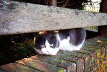 Street cats / Chats des villes, chats des rues, chats des jardins