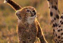 Wildlife photo ideas