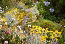 zahrada garden