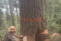 Skog og tre