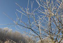 Zima / Zimní fotografie