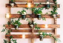 Plants & flowes