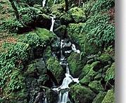 Beautiful #Marin County, California / by Dr Melanie Greenberg