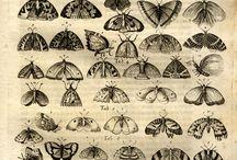 Nature: Taxonomy