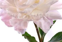 Flowers August Septemper