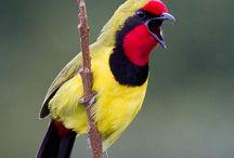 **Birds**