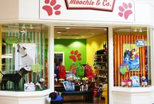 Pet Shop Ideas