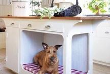 All Star Pet Minding Resort Ideas