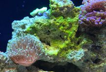 KanO's Reef Project