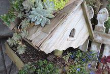 Garden Combinations / Plantings for Best Garden Effect.