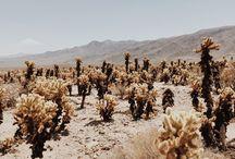 nature :: deserts