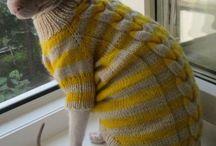 одежка для кошки