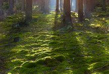 Bos/landelijk