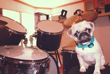 Puglets! / Our favorite fur baby pics from the team at CutePugPics.com! / by CutePug Pics