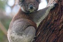 Favourite Aussie Animals