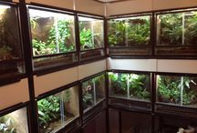 reptile / frog room