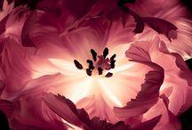 Flowers / by Angela Pengelly