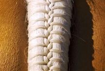 Paardenstaarten