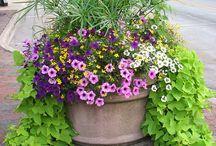 Fiori estivi / Scelta di fiori estivi per composizioni