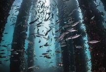 Krásy Oceánu
