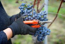 Vineyards / Le aziende che hanno abbracciato il progetto Wineverse, le loro terre, i loro tesori.
