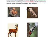 Lesné zvieratká