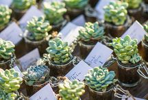 succulent wedding favour