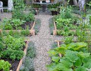 Cutting garden