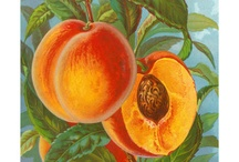 Peaches / by Janet Young Lei