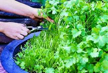 Growing Herbs 'n Veggies