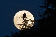 It's a magical night for a moon dance... / Howling at and dancing with the moon / by Niki Myers-Rogerson