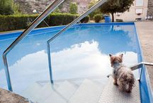Pool and Hot Tub Safety / Tips for staying safe when in your pool and hot tub.