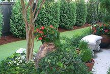 Future Backyard / Backyard gardening / by Sarah Barron