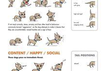 Hundespaß :-)