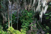 Bermuda Adventures / by Bermuda