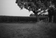 Black & white Photograph / Black & White