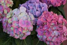 New Plant Trends for 2015 / Some new plant varieties to look for in 2015
