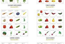warzywniak / vegetable garden