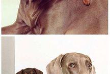 Fotos de animais engraçados