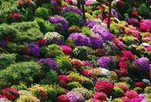 Be Inspired Garden Scapes / by Bernadette Fox