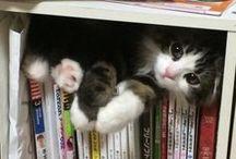 grappige kitten
