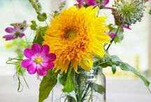 Colorful Blooms / Get inspired by pretty colors of seasonal blooms / by BEHR®