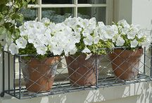 Window Boxes & Quirky Planters