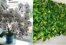 rostliny, květiny