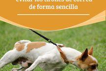 Perros mascotas