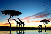 Africa / by Brittany Seabaugh