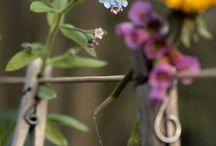 Blumen und Sträusse