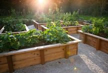 Food Garden Ideas