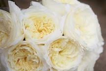 full florals / by Josephine Lau